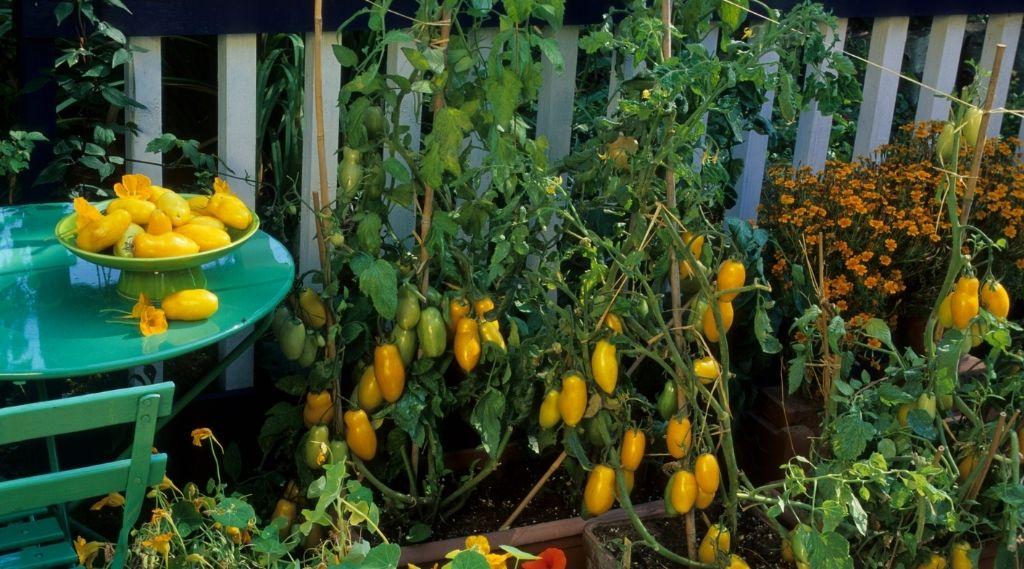 Balkonkert Tervezés – 2. Rész: Zöldségek a balkonkertben