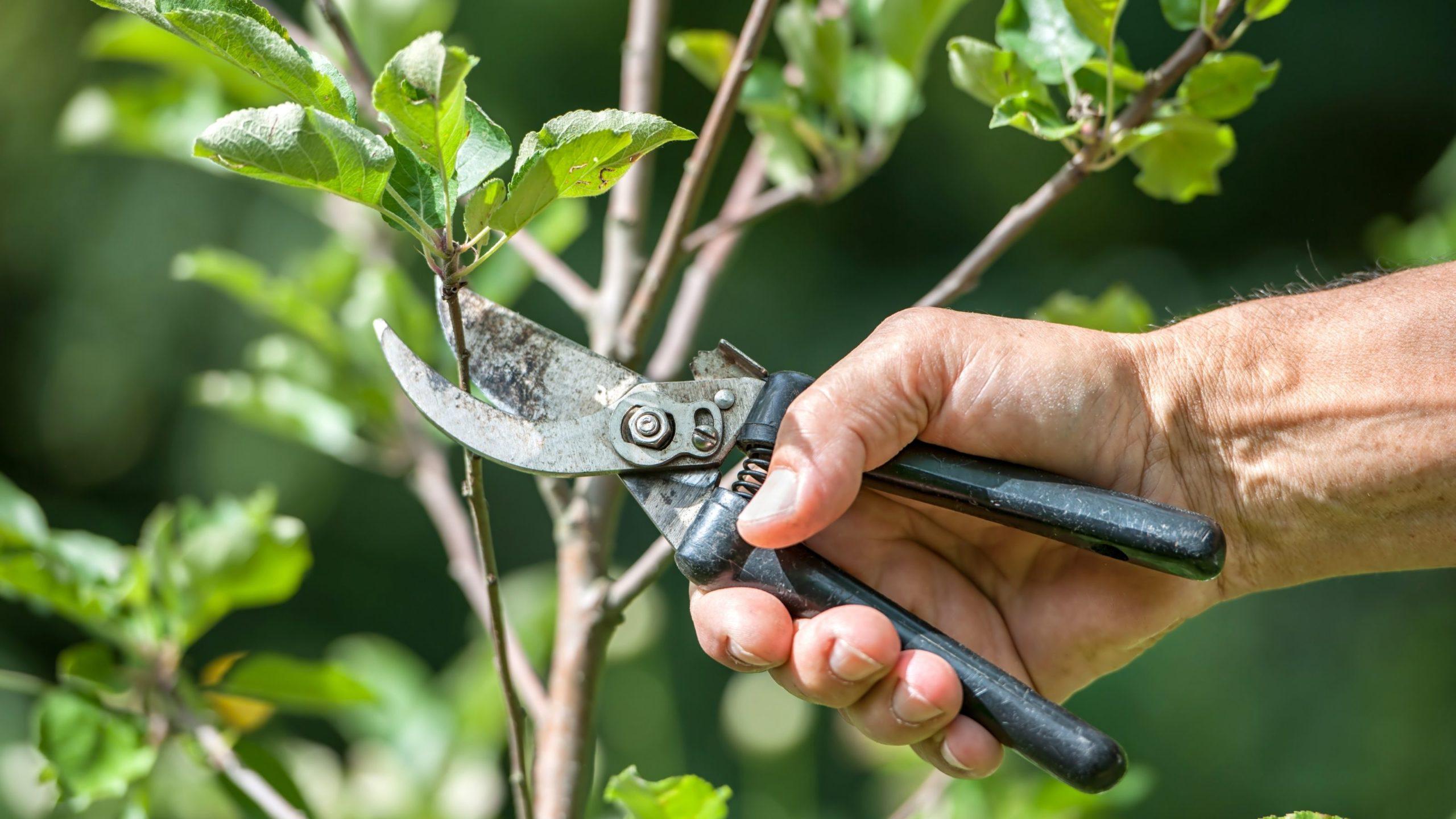 Vegyszermentes növényvédelem eszközei