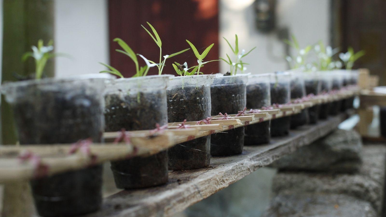 Tápanyagellátás az egészséges növényekért