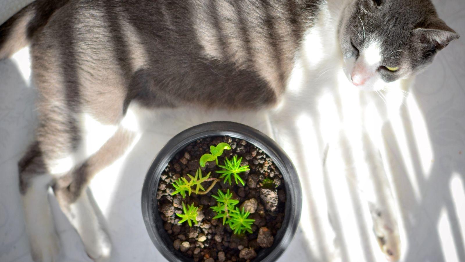 Hogyan neveljünk cserépben egészséges növényeket?