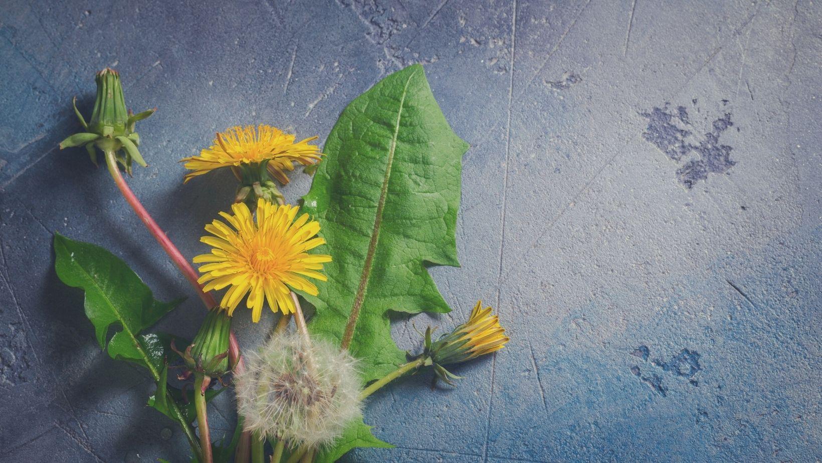 5 gyomnövény, amelyekből természetes tápoldat és növényvédőszer készíthető